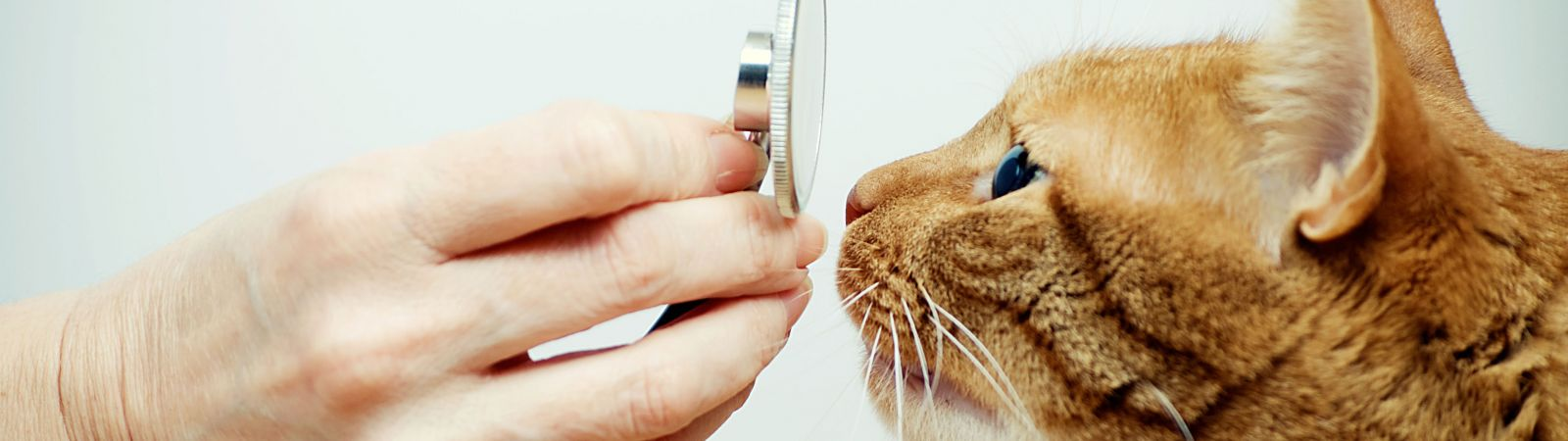 Clinique vétérinaires des abers