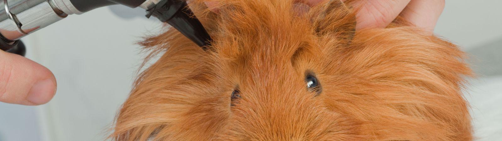Les services de la clinique vétérinaires des abers
