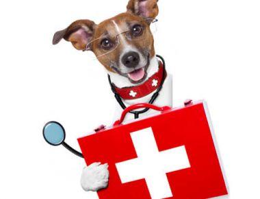 Bloc opératoire de la clinique vétérinaire des abers